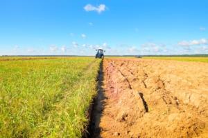 Semina di colture da sovescio: come gestirle con QdC®