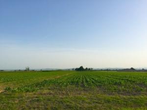 agricoltura-campo-terreni-romagna-mag-2015-by-cristiano-spadoni-agronotizie