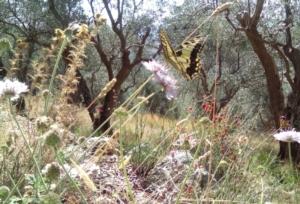 Progetto QuESSA, l'ambiente a servizio dell'agricoltura - Plantgest news sulle varietà di piante
