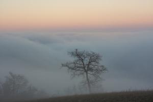 albero-nebbia-collina-tramonto-stefano-guerra