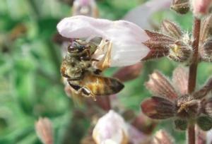 api-apicoltura-by-matteo-giusti-agronotizie-jpg