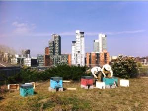 apicoltura-urbana-by-antonio-barletta-urbees