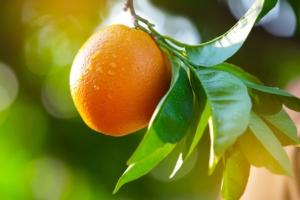 Arancio, il nemico bussa alla porta