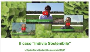 La sostenibilità cresce con l'indivia