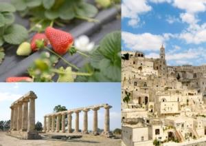 Fragole, la Basilicata è prima nella produzione - Plantgest news sulle varietà di piante