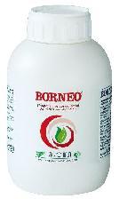 bott_Borneo_02_OK