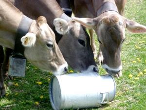 Quote volontarie per il latte