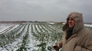 Neve e gelo al Sud, agricoltura in ginocchio