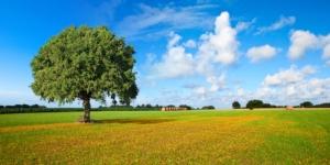 Largo ai giovani, nasce la Banca delle terre agricole