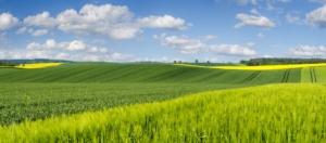Cambiamenti climatici, l'agricoltura si sposta verso Nord
