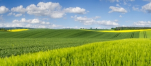 campo-agricoltura-colline-by-mike-mareen-fotolia-750