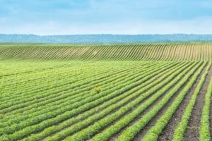 campo-agricoltura-dusan-kostic-fotolia-750x500
