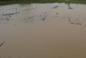 Alluvione di Livorno, colpita anche l'agricoltura