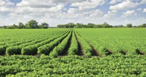 campo-soia-fonte-assosementi-associazione-italiana-sementi