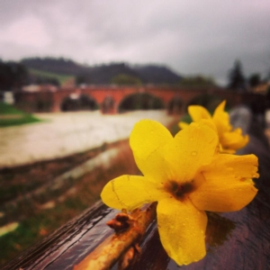 cesena-ponte-vecchio-savio-andrea-raggini-fiore-giallo-fiume