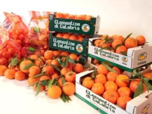 clementine-di-calabria-igp26lug2017consorzio-di-tutela