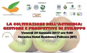 La coltivazione dell'actinidia: gestione e prospettive di sviluppo