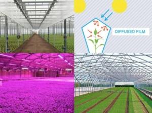 Colture protette: gestione del clima in serra, scelta del film plastico e controllo patogeni