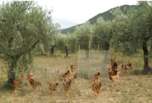consociazione-polli-olivi-by-cesare-castellini-universita-perugia-jpg