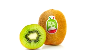 Kiwifruit of Italy, al via la raccolta dalla prossima settimana