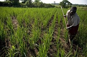 contadino-agricoltore-accesso-al-suolo-fonte-fao