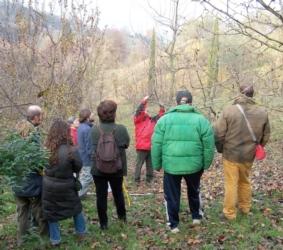corso-potatura-vivai-belfiore-novembre-2012
