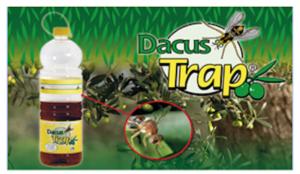 Dacus Trap contro la mosca dell'olivo