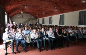 Pinot Grigio delle Venezie: evoluzione qualitativa e aspettative di mercato