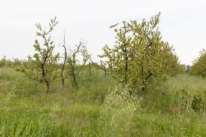 Sfalci d'erba, le opportunità di valorizzazione