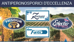 Fantic, contro la peronospora con l'import tolerance