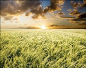Le innovazioni lungo la filiera chimico-agroalimentare