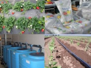 fertilizzanti-npk-silvio-fritegotto-20170802