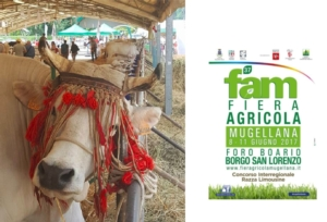 fiera-agricola-mugellana-vacca-esposizione-locandina-37-edizione-by-fiera-agricola-mugellana-jpg