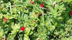 fiori-api-fonte-compag