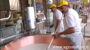 formaggio-grana-caseificio-expo-fonte-barbara-righini-agronotizie