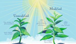 fotosintesi-universita-illinois