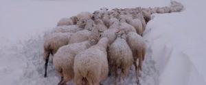 """Emergenza neve, Cia: """"Oltre un miliardo di danni al Centro-Sud"""""""