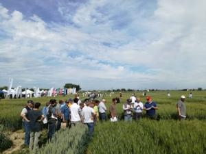 giornata-grano-2017-cap-ravenna-fonte-lorenzo-pelliconi-agronotizie