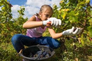 giovani-agricoltura-studenti-tirocinio-by-eleonore-h-fotolia-750