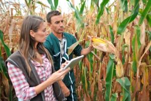 Agricoltura, il Sud che investe e dà lavoro