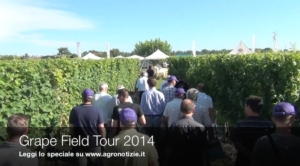 grape-field-tour-syngenta-i-magredi-pordenone-2014-by-agronotizie-cs