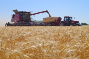 harvestingcampspain02