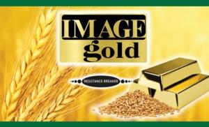 Image Gold: la soluzione più conveniente per le infestanti difficili del frumento