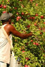 immigrati_agricoltura