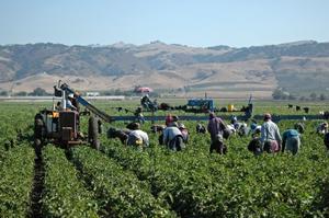 immigrati_lavoro_stagionale_agricoltura