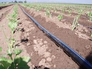 irrigazione-a-goccia-fonte-silvio-fritegotto1