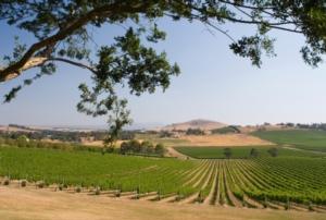 Come valutare la sostenibilità del vino italiano?