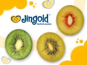 jingold-21