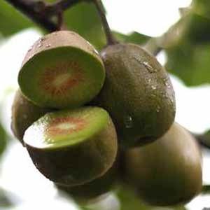 kiwi-rosso-cina-w-fonte-italiafruit