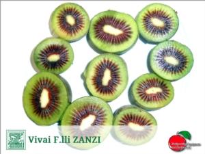 HFR 18<sup>*</sup>, il nuovo kiwi a polpa rossa - Plantgest news sulle variet&agrave; di piante